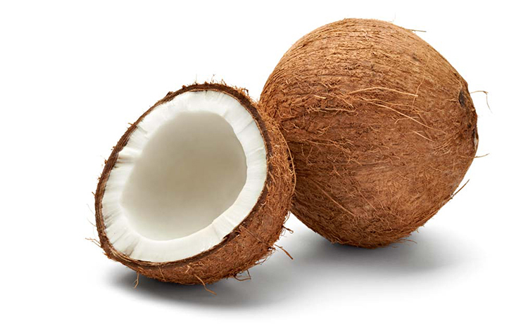 NOYA Lip Balm Series – Coconut Oil